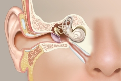 Ear-Normal