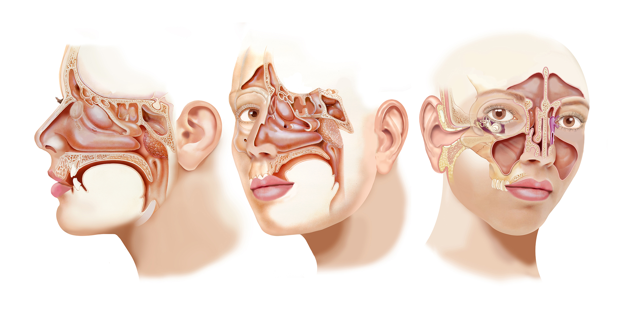 ear canal Archives - Jackie Heda | Biomedical & Scientific Visuals